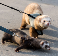 ferret out